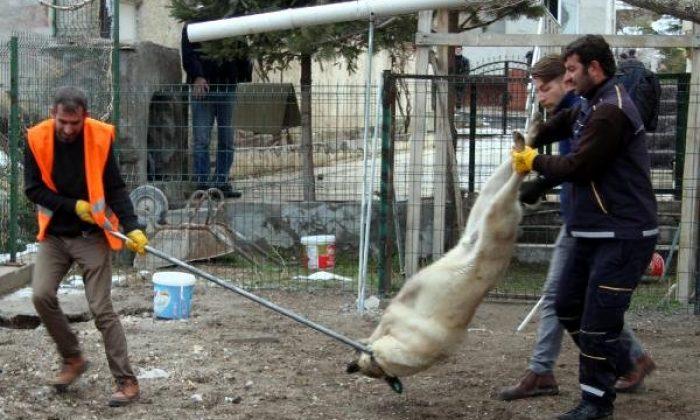 25 köpeğin sahibi hayvan hakları derneği başkanına gözaltı