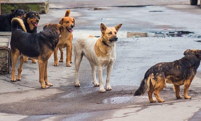 Bir köpek vahşeti daha Kırşehir'de